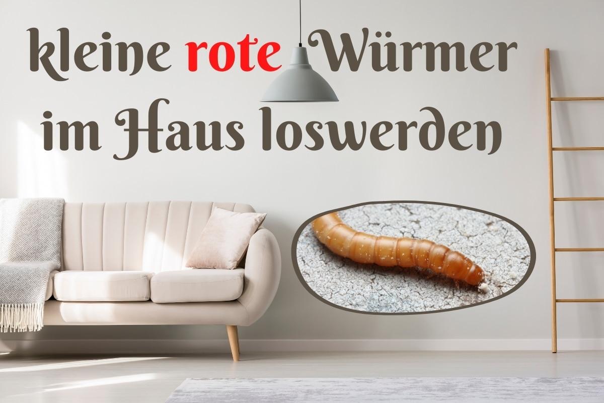 rote Würmer im Haus bekämpfen - Titel