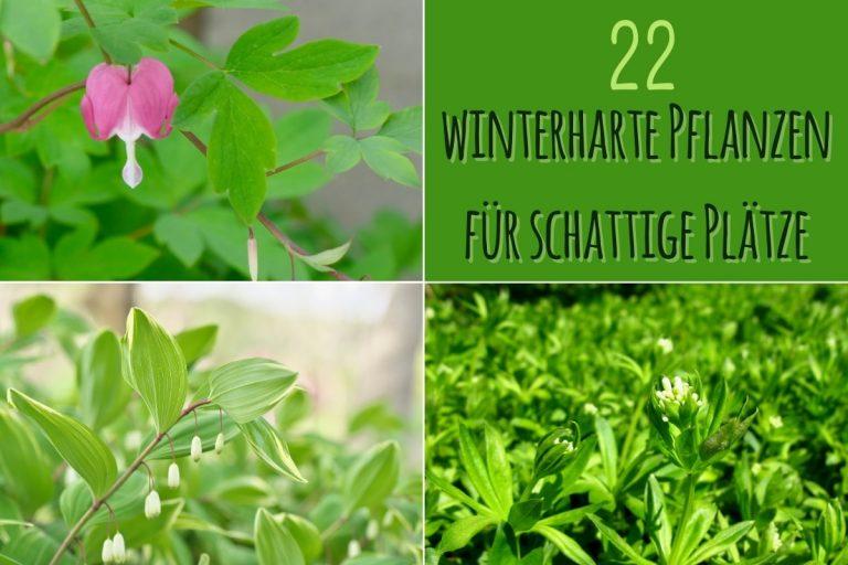 Winterharte Pflanzen für schattige Plätze - Titel