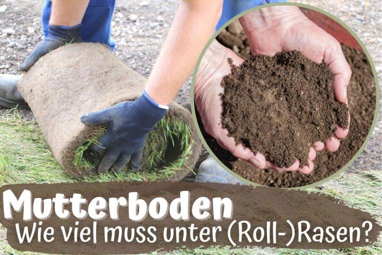 Wie viel Mutterboden unter Rasen