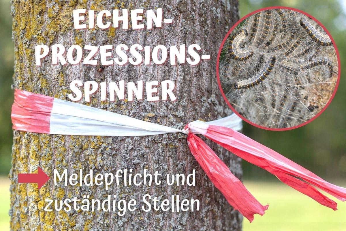Eichenprozessionsspinner melden - Baum mit Warnhinweis