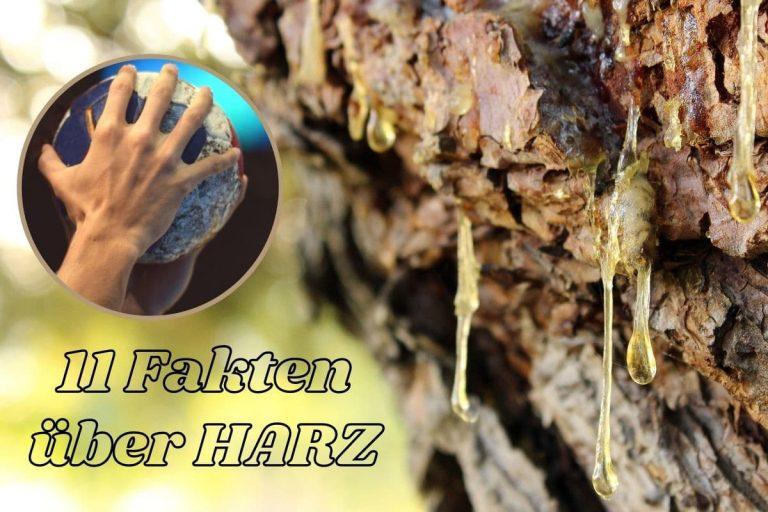 11 Fakten über Harz