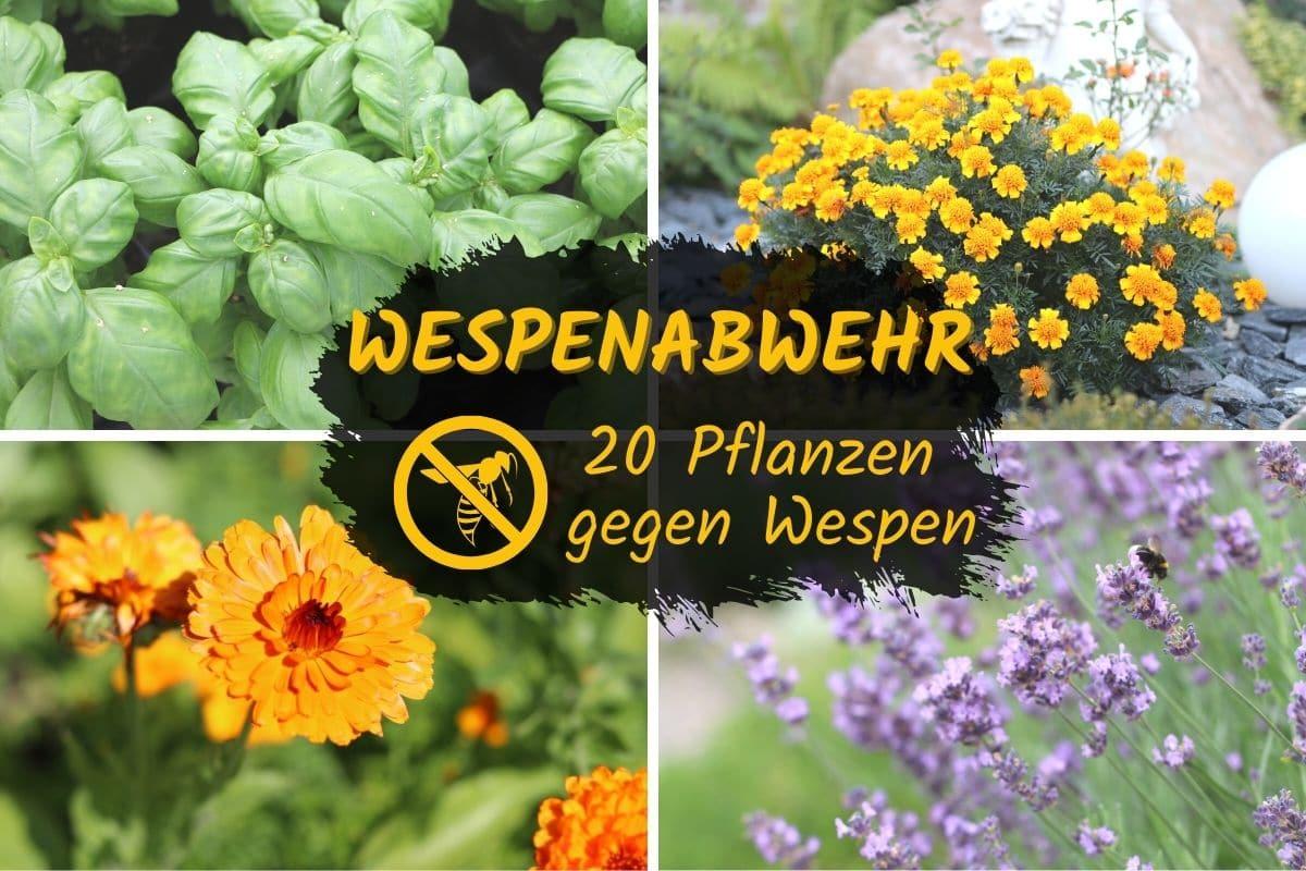Pflanzen gegen Wespen