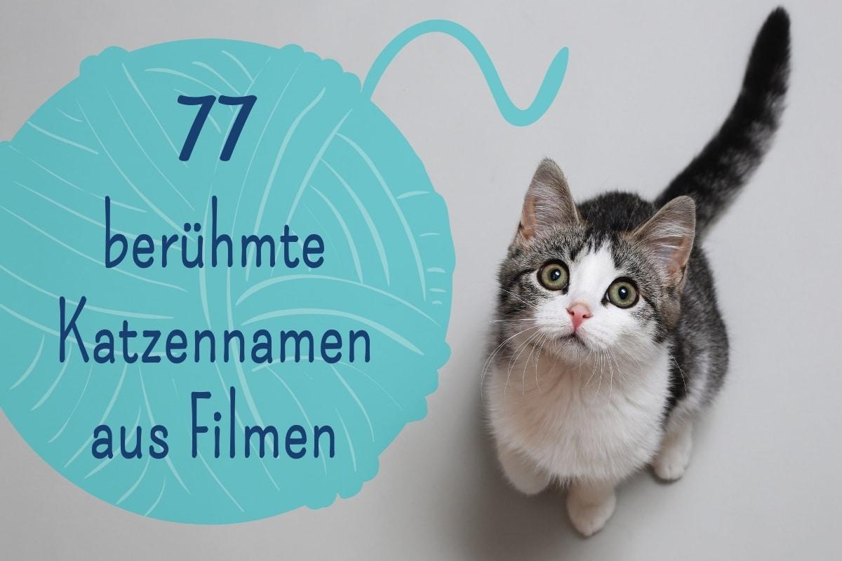 berühmte Katzennamen aus Filmen - Titel