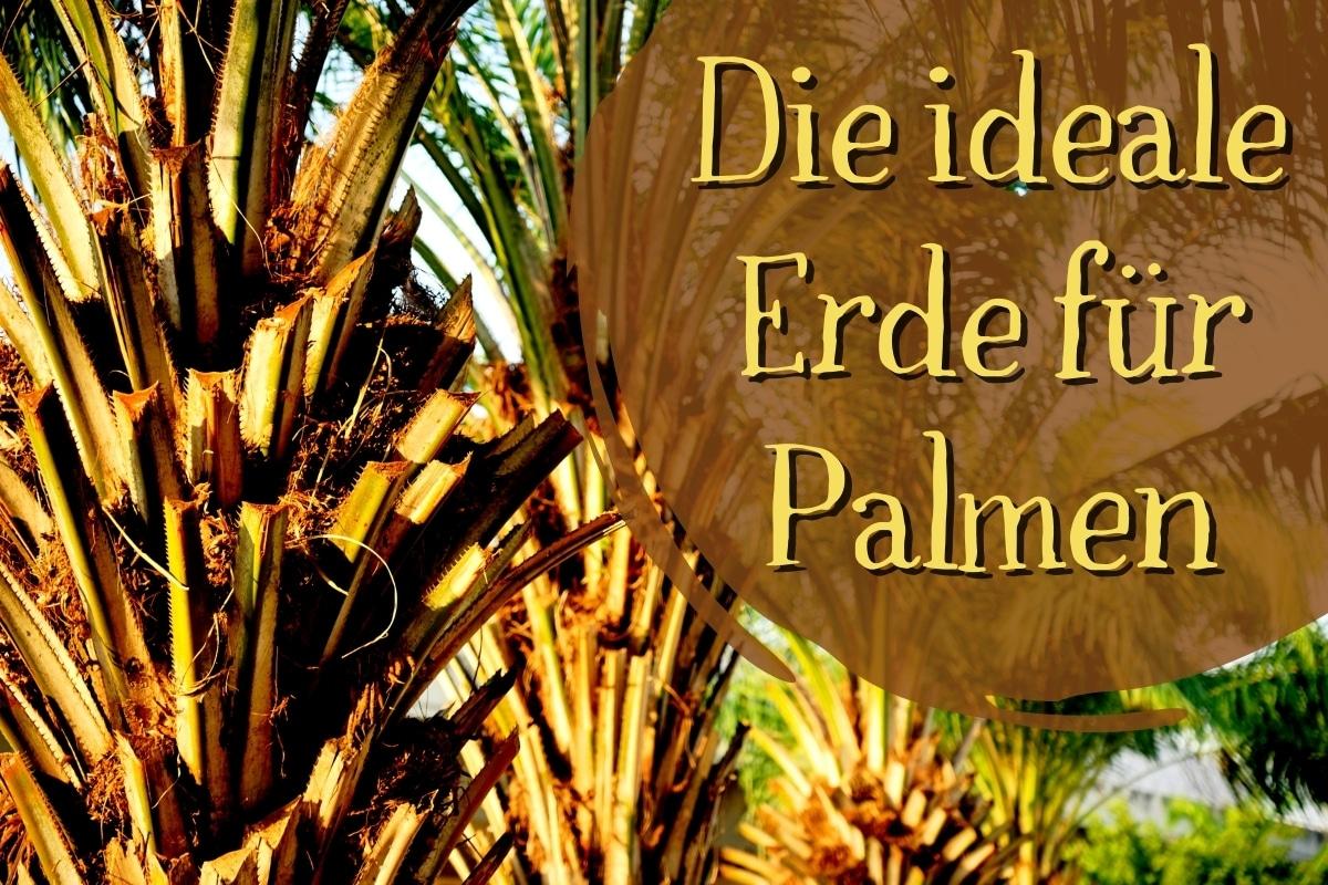 die ideale Erde für Palmen - Titel