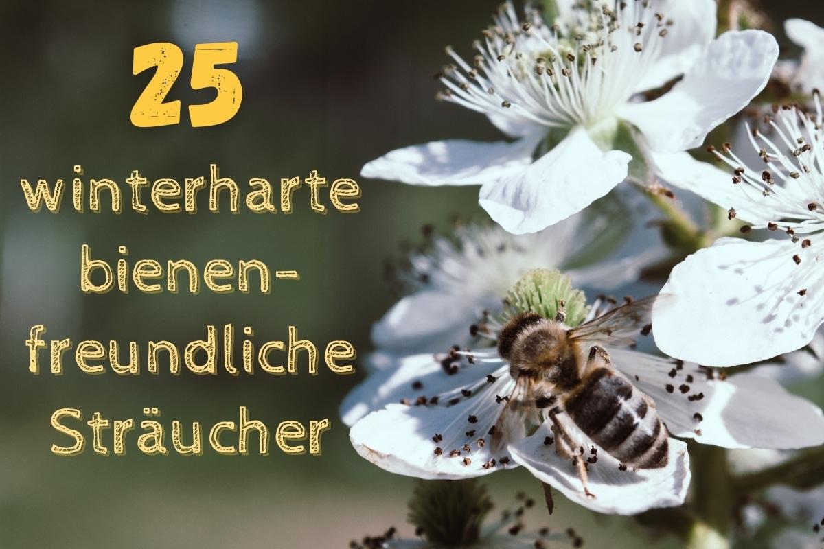 winterharte bienenfreundliche Sträucher - Titel