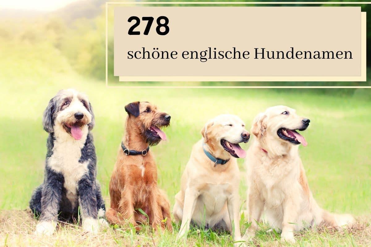 schöne englische Hundenamen