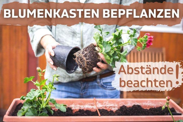 Wie viele Pflanzen in Blumenkasten setzen