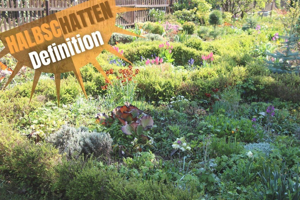 Garten im Halbschatten