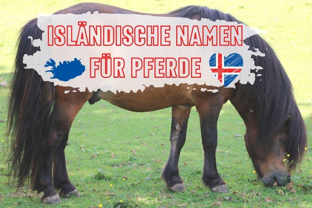 Isländische Pferdenamen