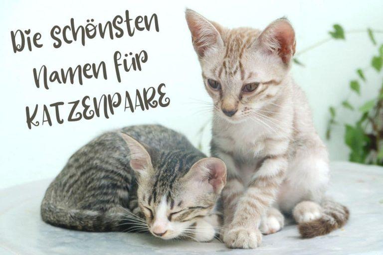 Schönste Katzennamen für Pärchen und Geschwister