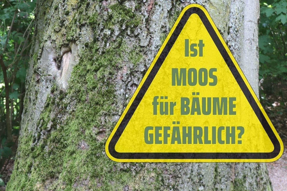 Moos an Bäumen entfernen