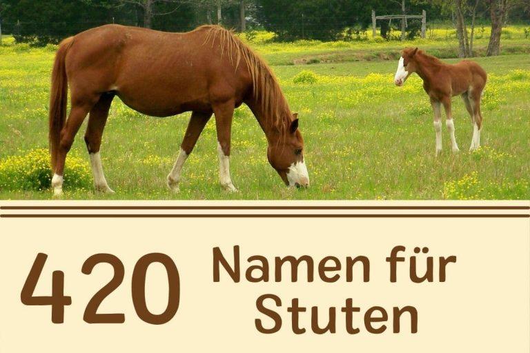 Das sind die schönsten Pferdenamen für Stuten