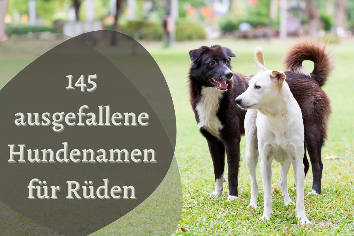 Ausgefallene Hundenamen für Rüden - Titel