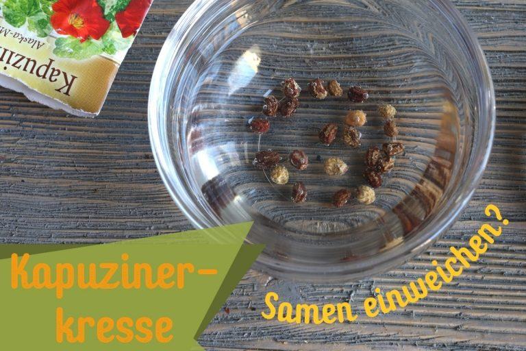 Kapuzinerkresse Samen einweichen - Titel