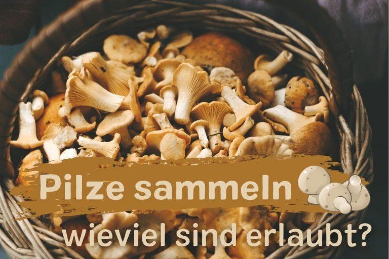 wieviel Pilze darf man sammeln?
