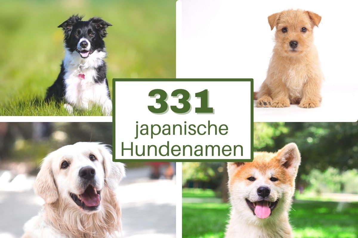 Vorschläge für japanische Hundenamen