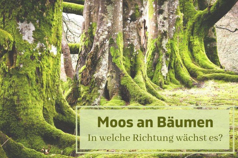 wächst Moos an Bäumen immer in die selbe Himmelsrichtung?