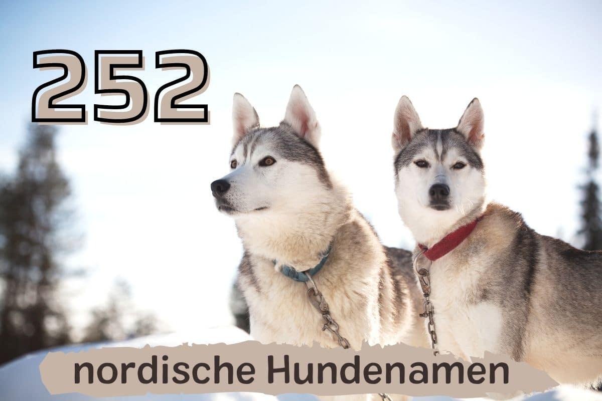schöne nordische Hundenamen