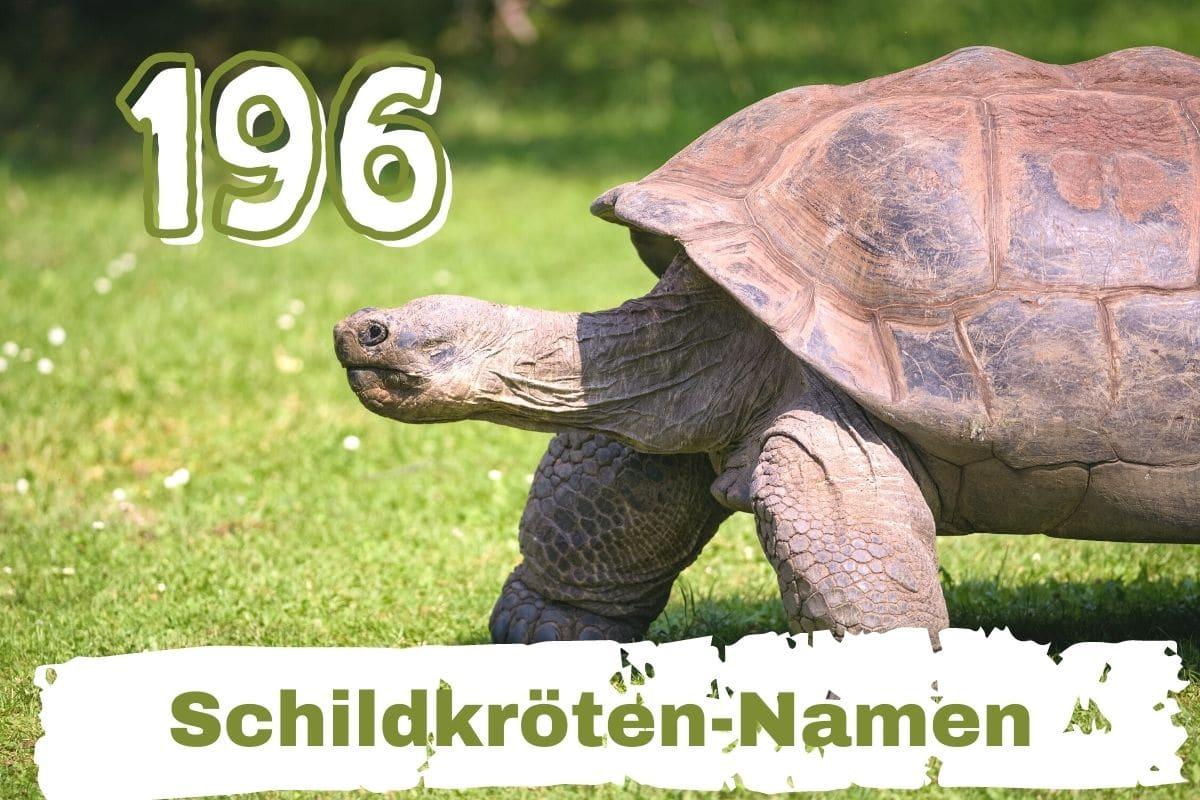 schöne Schildkröten-Namen