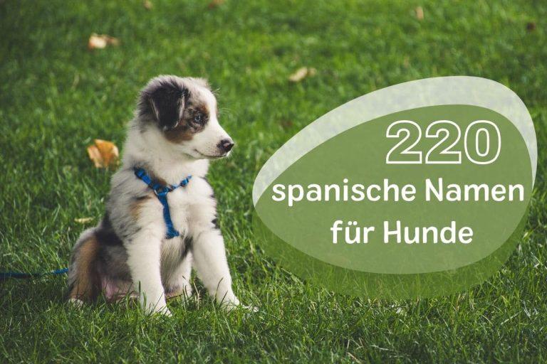 weibliche und männliche spanische Hundenamen