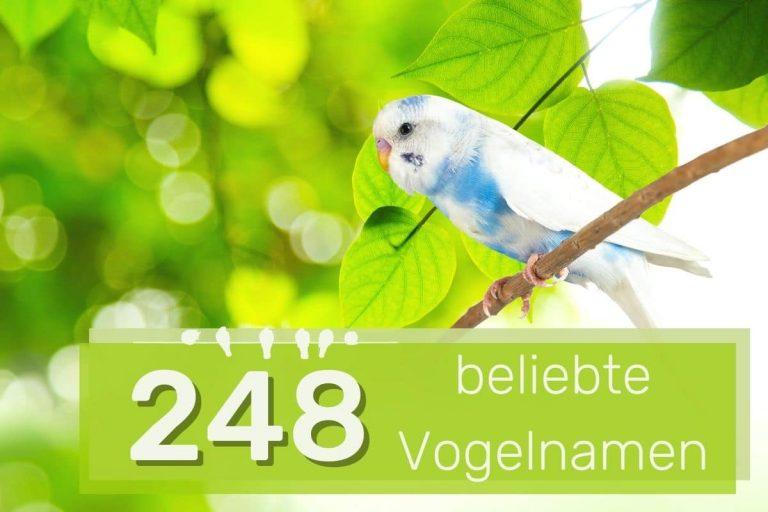 beliebte Vogelnamen