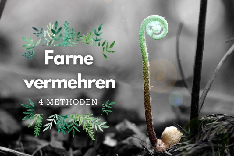 Farne vermehren: 4 Methoden - Titelbild