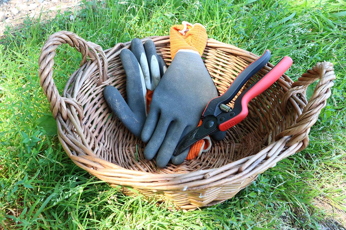 Handschuhe & Schere für die Herstellung von Brennnesseljauche für Rosen