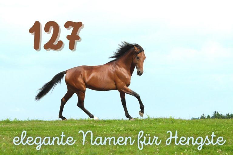 elegante und starke Pferdenamen für Hengste