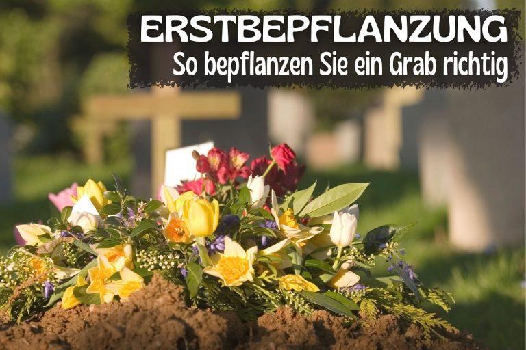 Erste Grabbepflanzung