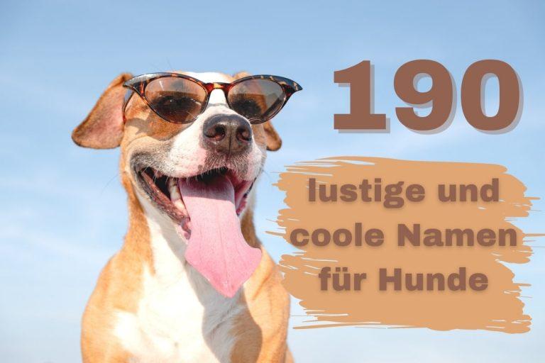 Lustige und coole Hundenamen