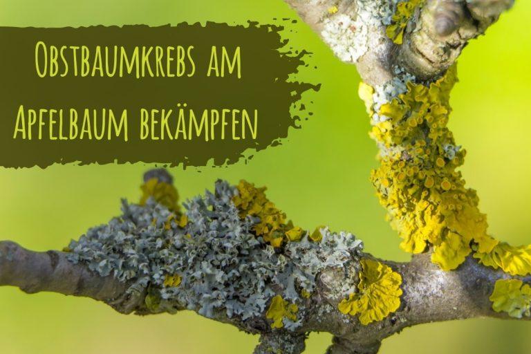 Obstbaumkrebs bekämpfen - Titel