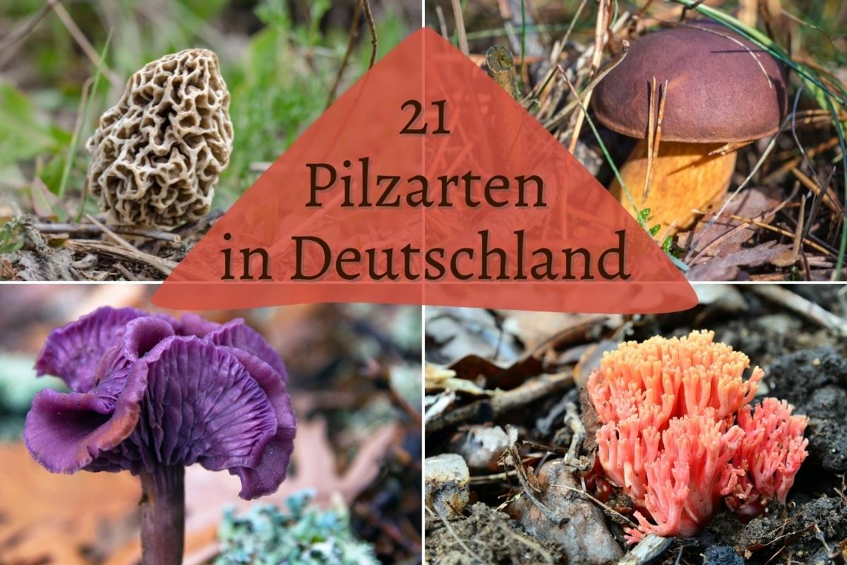 Pilzarten in Deutschland - Titel