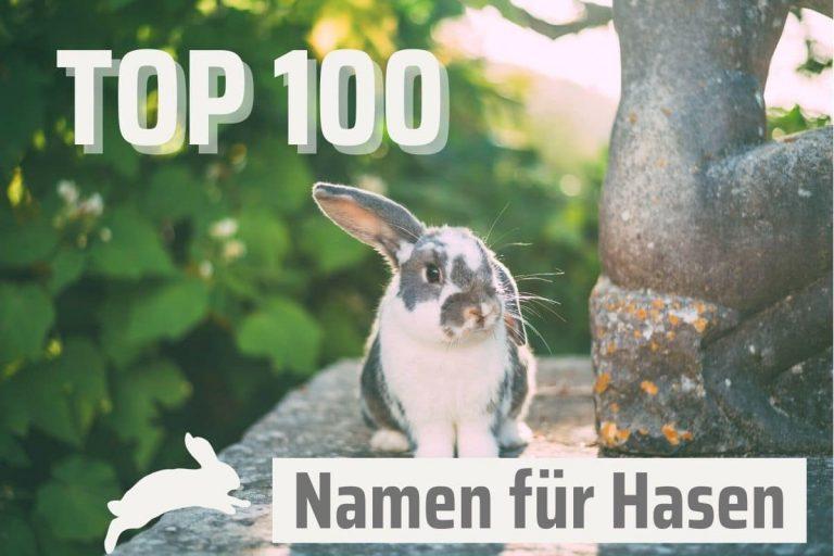 die 100 beliebtesten Hasennamen