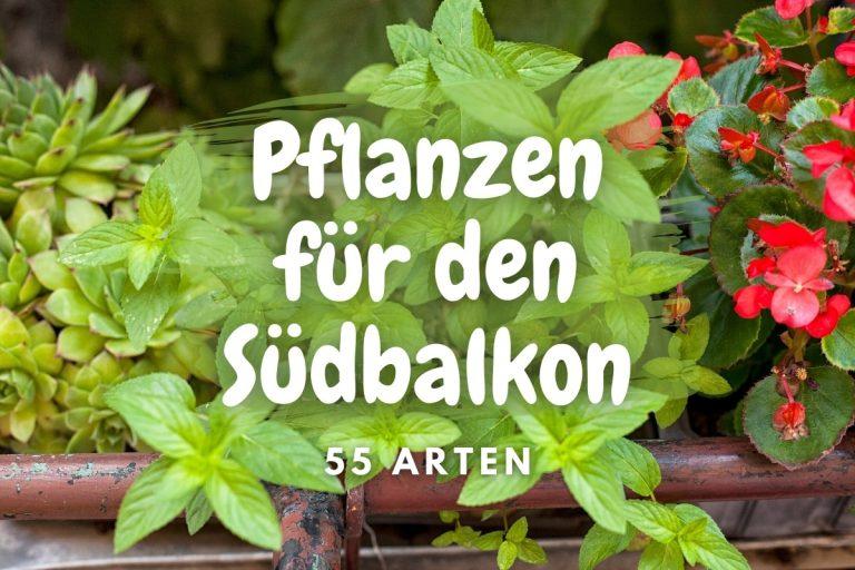 55 perfekte Pflanzen für den Südbalkon - Titelbild