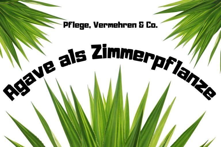 Agave als Zimmerpflanze: Pflege, Vermehren & Co - Titelbild