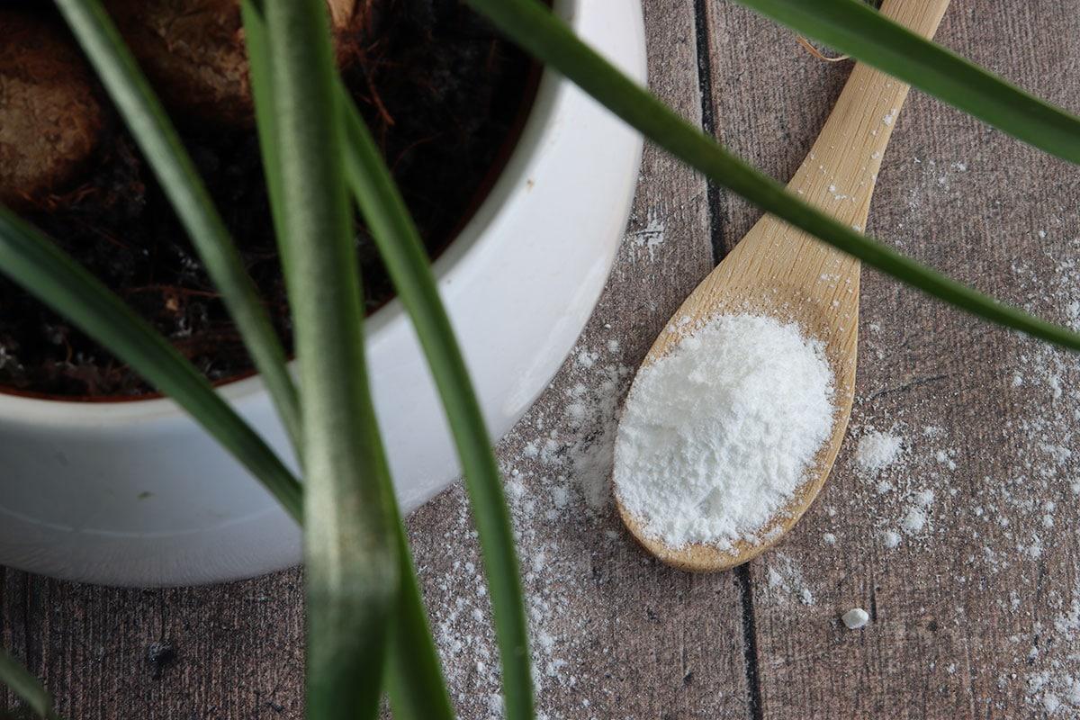 Backpulver zur Bekämpfung von Blattläusen