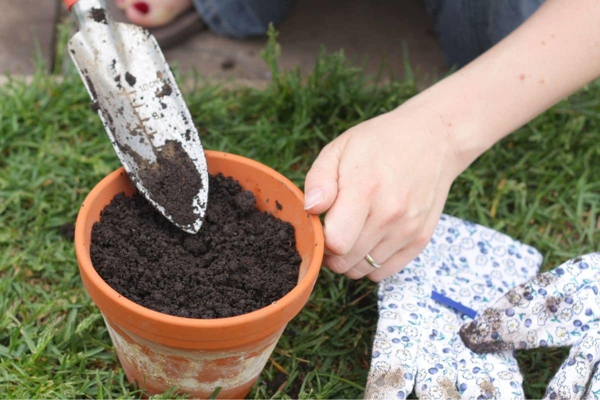 Blumentopf mit dem richtigen Substrat befüllen