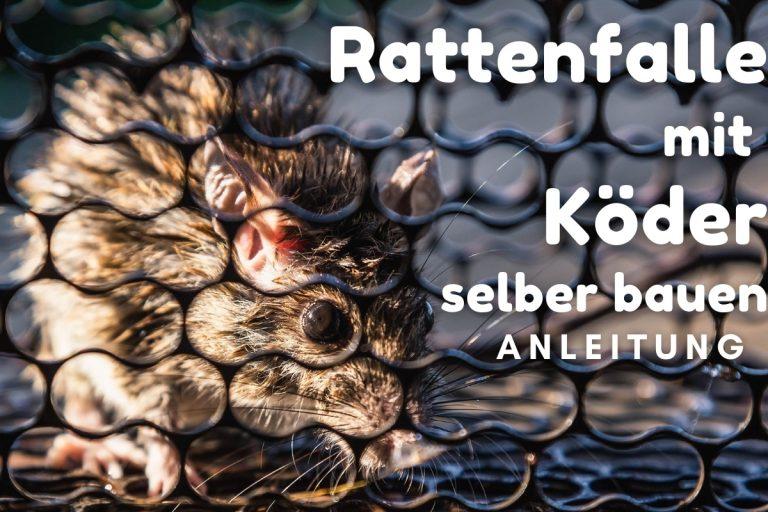 Effektive Rattenfalle mit Köder selber bauen - Titelbild