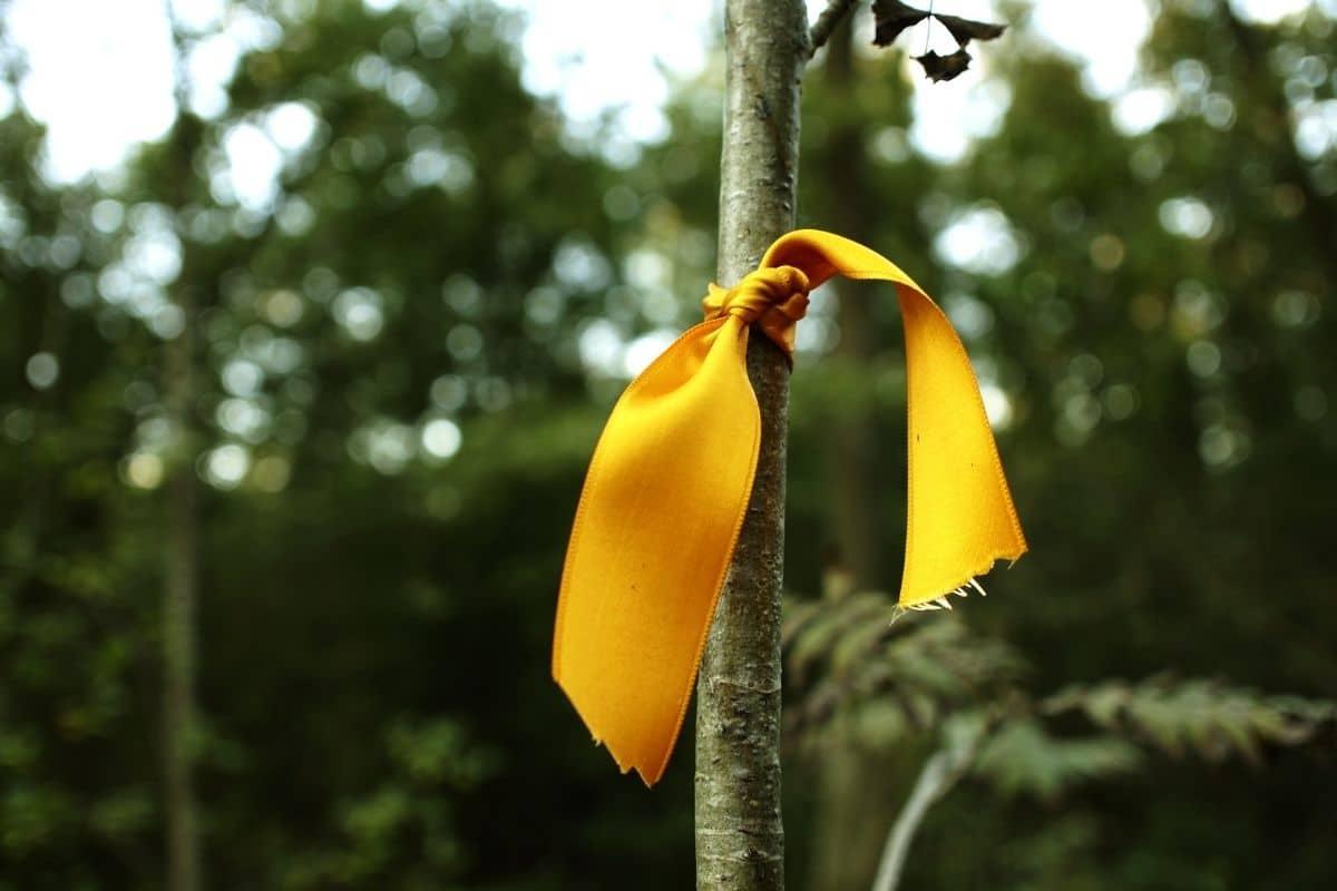 Gelbes Band an Obstbaum