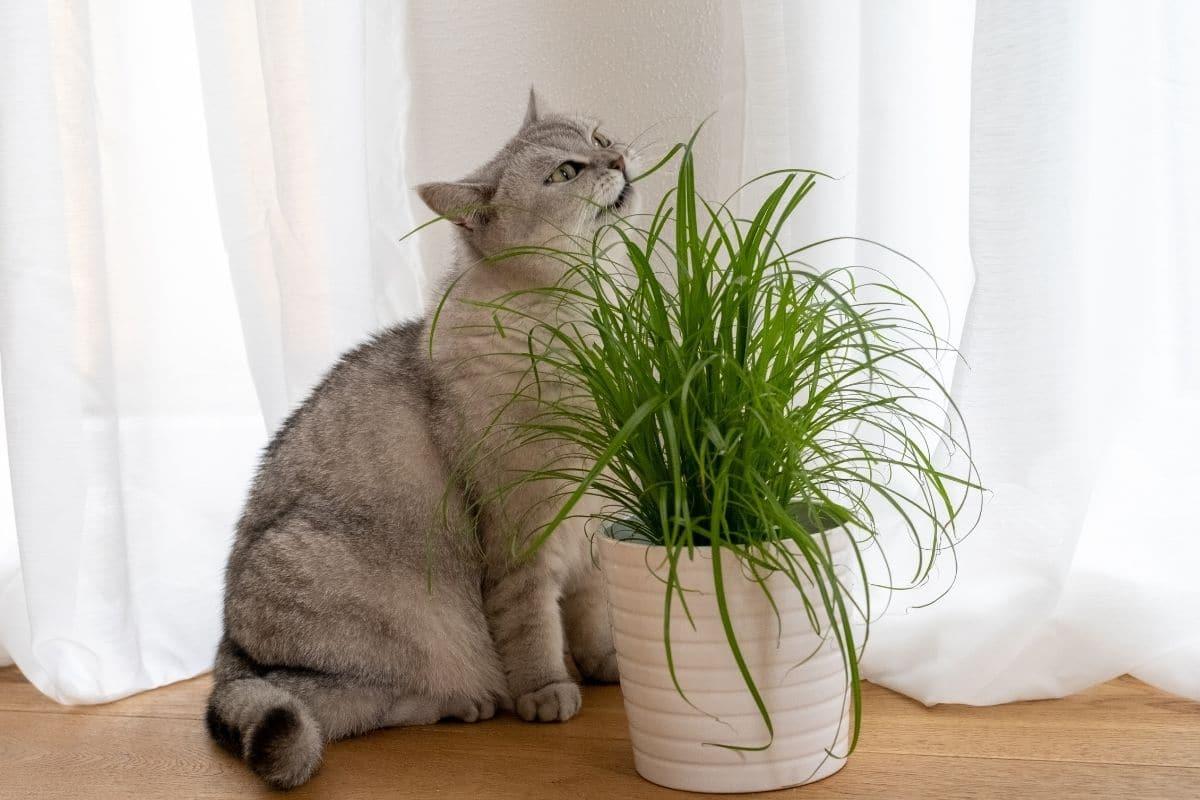 Katze mit Gras