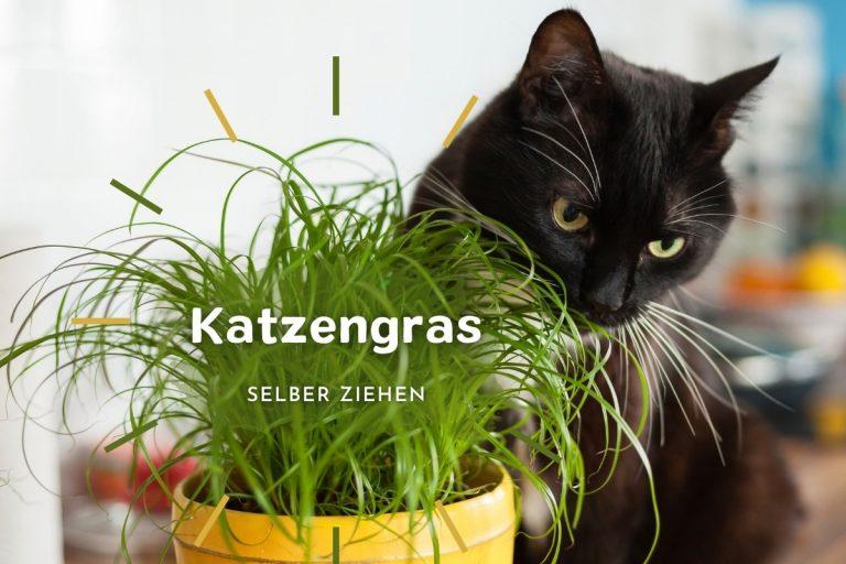 Katzengras selber ziehen: so geht's - Titelbild