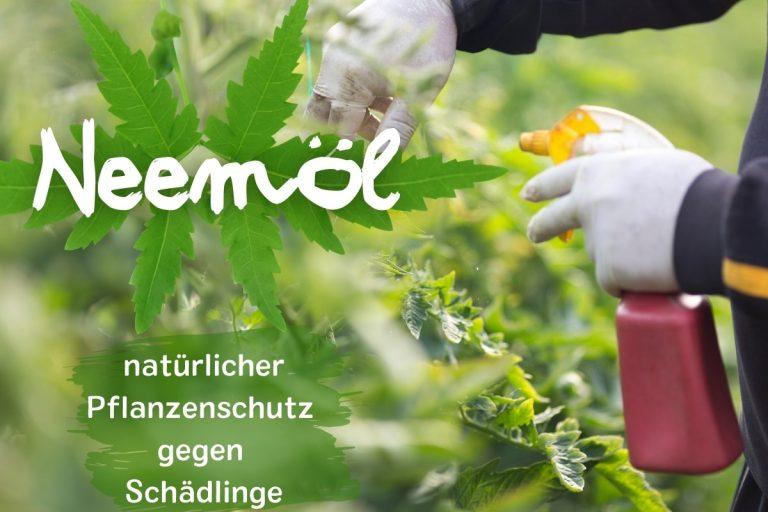 Neemöl: natürlicher Pflanzenschutz gegen Schädlinge - Titelbild