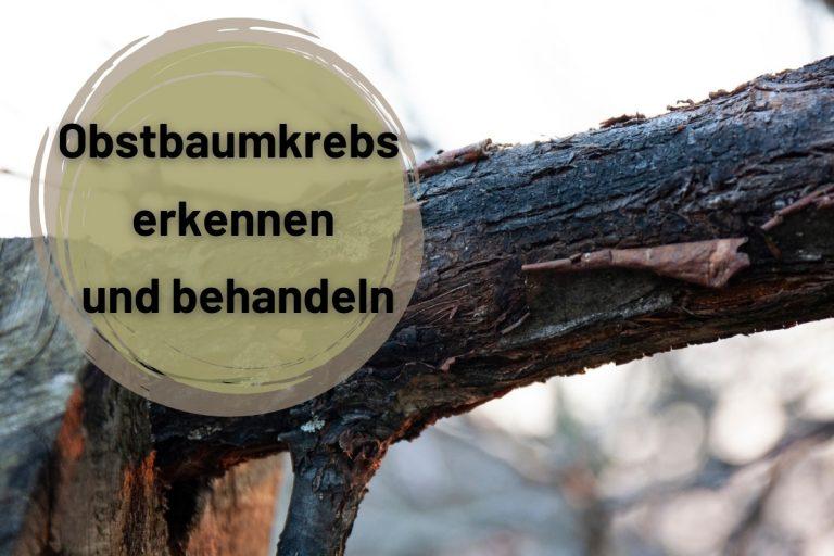 Obstbaumkrebs erkennen und behandeln - Titelbild