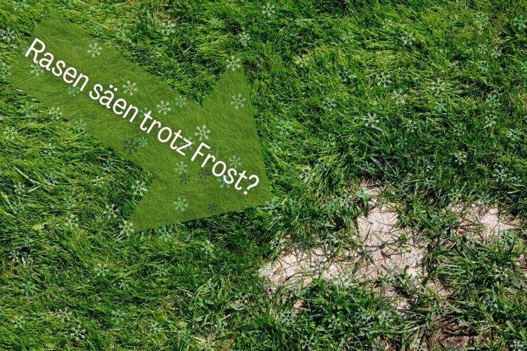 Rasen säen trotz Frost: ist das möglich? Titelbild