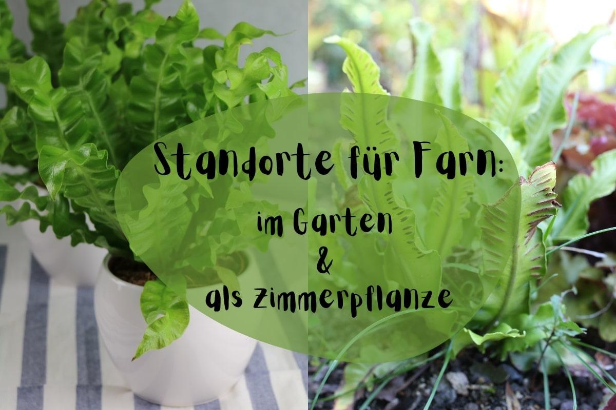 Standorte für Farn: im Garten und als Zimmerpflanze - Titelbild
