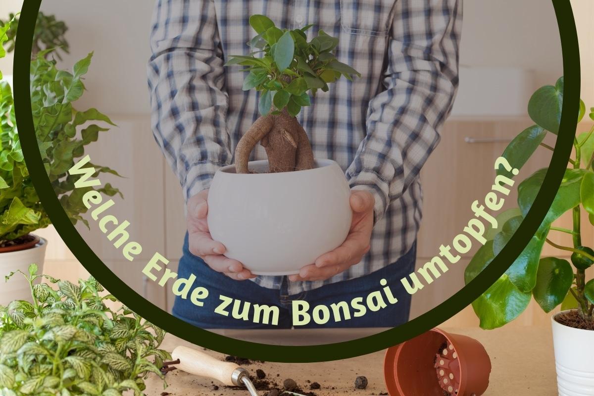 Bonsai umtopfen - Titel