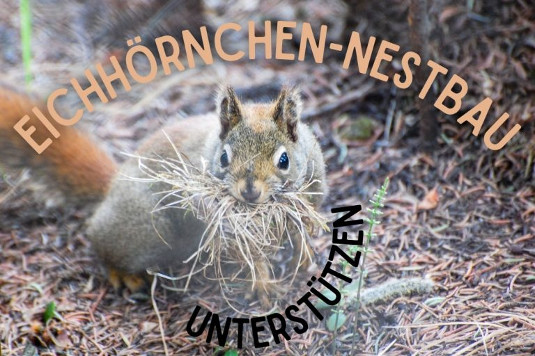 Eichhörnchen Nestbau - Titel