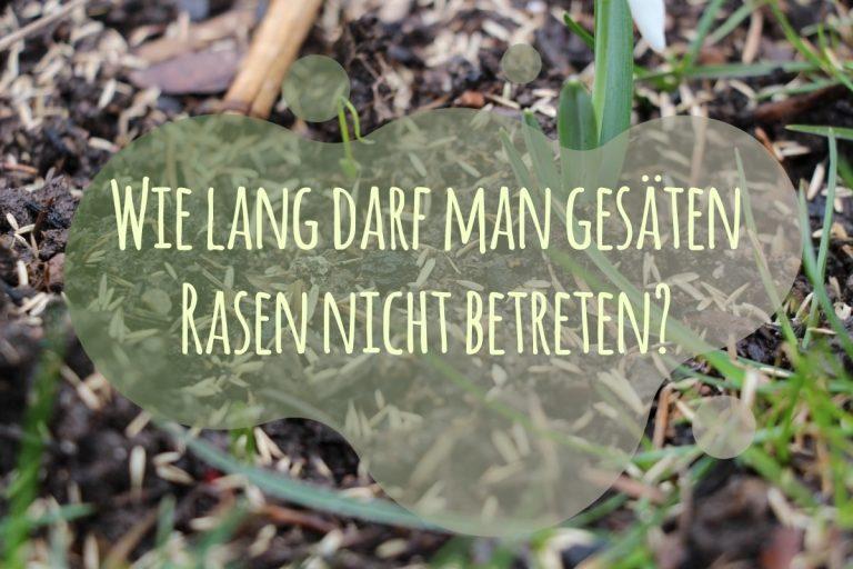gesäten Rasen betreten - Titel