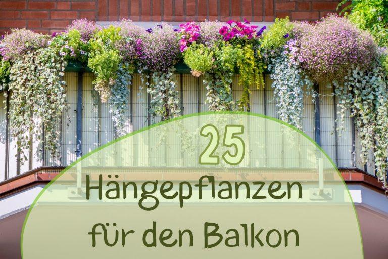 Hängepflanzen für den Balkon
