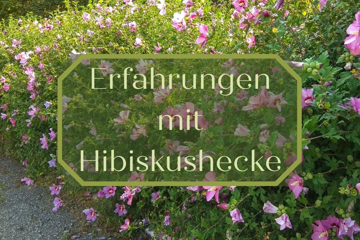 Hibiskushecke - Titel